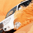 4x4 dune bashing is a popular sport of the Arabian desert — Stock Photo