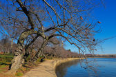 The Tidal Basin of the Potomac River in Washington DC, USA — Стоковое фото