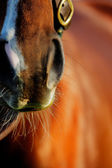 An abstract photo of the Thoroughbred racing horse — Stock Photo