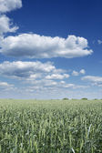 Green landscape — Stock Photo