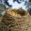 Stock Photo: Nest close up