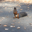 Squirrel — Stock Photo #16305587