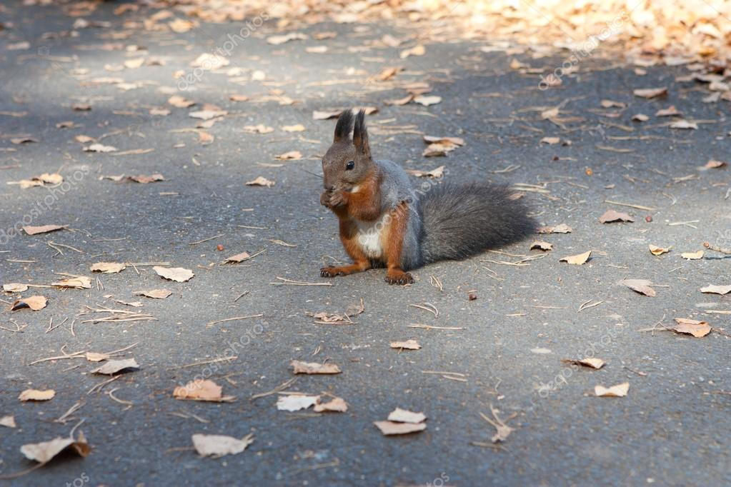 The squirrel eats pine nuts — Stock Photo #16305587