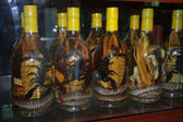 Bottles with snakes and scorpions in street shop — Stock Photo