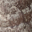 Royalty-Free Stock Photo: Brown grunge wooden texture background, vertical