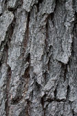 Texture of bark in the natural park — Stock Photo