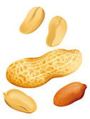 Peanut Illustration — Stock Photo