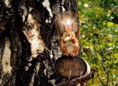 Squirrel at dinner — Stock Photo