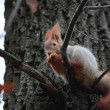 The squirrel on a tree. — Stock Photo #14461883