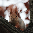 The squirrel on a tree. — Stock Photo