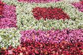 Last flowers of autumn. — Stock Photo