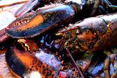 European clowed lobster — Stock Photo