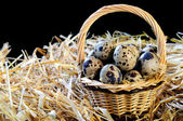 Little Hamper of Quail Eggs — Stock Photo