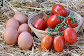 Eggs and tomatoes — Stock Photo