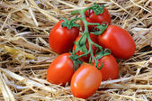 Tomatoes on straw — Stock Photo