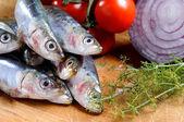 Closeup of sardines — Stock Photo