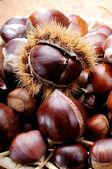 Chestnuts freshly harvested — Stock Photo