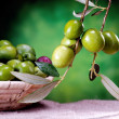 Group of green olives — Stock Photo