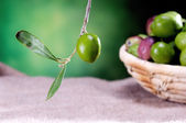 Olive on green background — Stock Photo