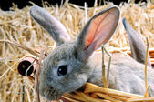 Curious rabbit — Stock Photo