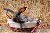 Cute young rabbit — Stock Photo