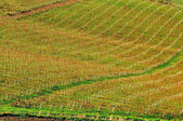 Sicilian vineyards in autumn time — Stock Photo