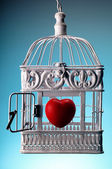 Heart in open cage — Stock Photo