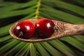 Oil Palm Fruit — Stock Photo