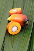 Palmiye yağı meyve — Stok fotoğraf