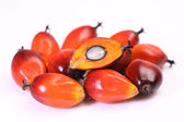 Oil palm fruit — Stock Photo