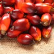 Oil Palm Fruit — Stock Photo #33843867