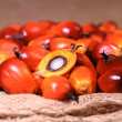 Oil palm fruit — Stock Photo #33846217