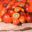Oil palm fruit — Lizenzfreies Foto