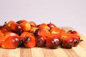 плод масличной пальмы — Стоковое фото