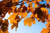 秋を葉します。 — ストック写真