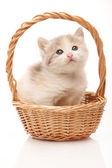 Little kitten in the wicker — Stock Photo