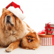 Christmas dogs — Stockfoto #29638361