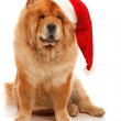 Christmas dog — Stock Photo #29638473