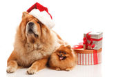 Christmas dogs — Stock fotografie