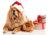 Perros de navidad — Foto de Stock