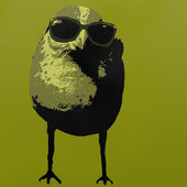 Pop Art Style Bird Wearing Sunglasses — Stock Photo