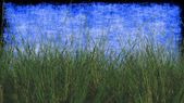 Wheat Grass with Textured Background in Blue — Stockfoto