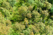 Trees seen from above — Stock Photo