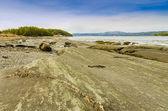 Plaża skalista krajobraz — Zdjęcie stockowe