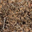Ants in an anthill — Видео