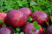 Big red apples — Stock Photo