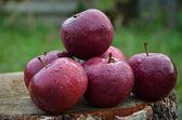 Några äpplen — Stockfoto