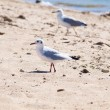 Seagull on the sand by the sea — Stock Photo #14158697