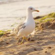 Stock Photo: Seagull on the sand by the sea