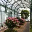 Постер, плакат: Laeken The Royal Greenhouses